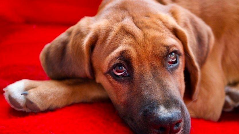 Diputada busca prohibir la venta de animales domésticos en establecimientos