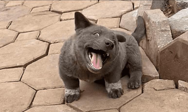 INSÓLITO: Híbrido entre un gato y un perro ¡es tan bonito!