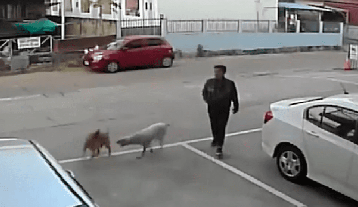 VIDEO VIRAL: perritos se peleaban en la calle y sujeto se lleva la peor parte