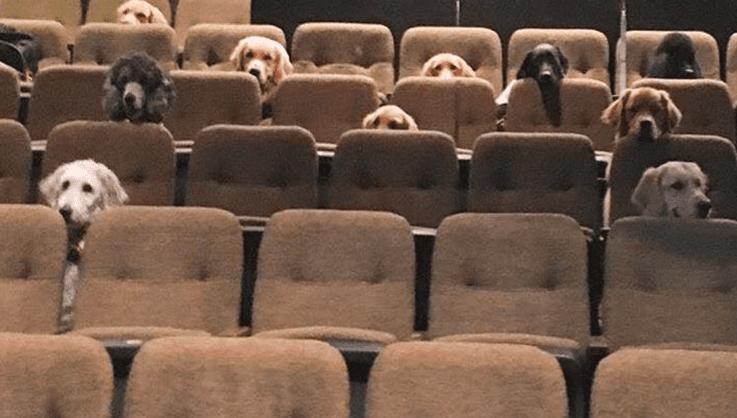 VIRAL Perros vieron un musical en vivo como parte de su entrenamiento FOTOS