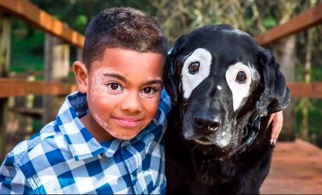 VIRAL: Perro con vitiligo cura depresión de niño con su misma afección