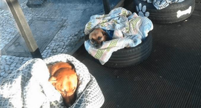 Estación de autobuses deja dormir en su terminal a perros callejeros
