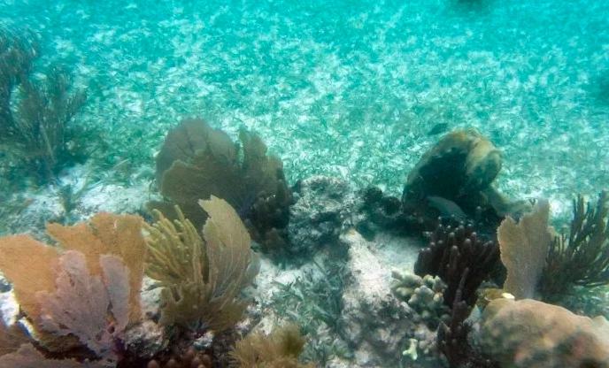 Colabora Grupo Iberostar en la construcción de vivero madre de coral en la Riviera Maya