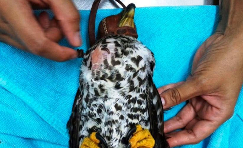 Playa del Carmen: Fauna silvestre sale ilesa tras el paso del huracán