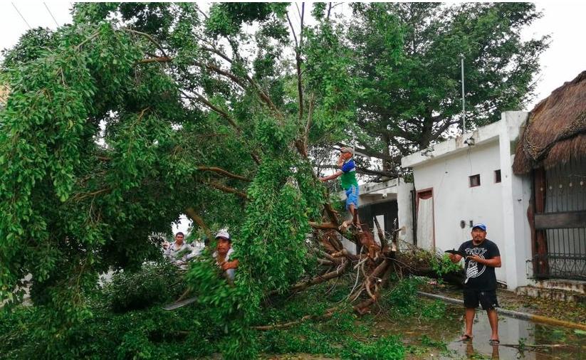 Playa del Carmen: Caída de árboles por huracán pudo haberse evitado