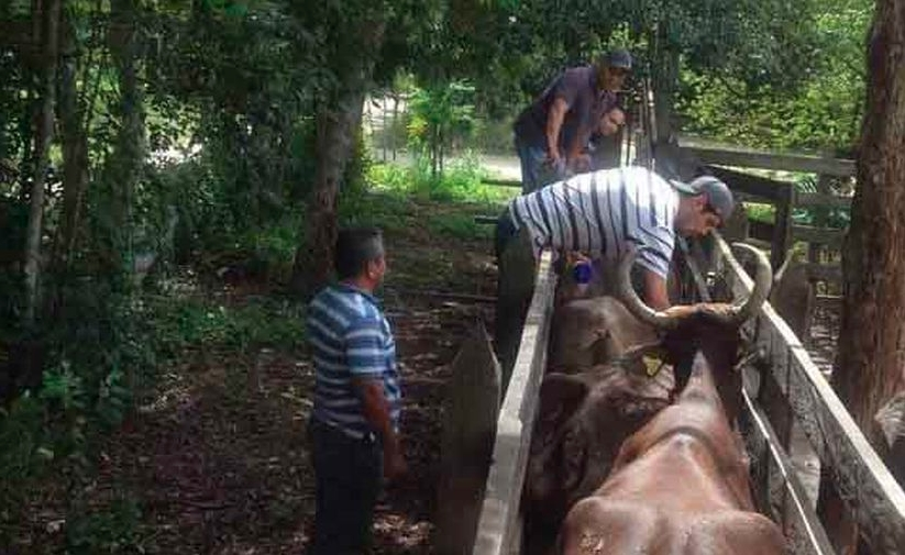 Playa del Carmen: Ganaderos tardarán un año en recuperarse de estragos climatológicos