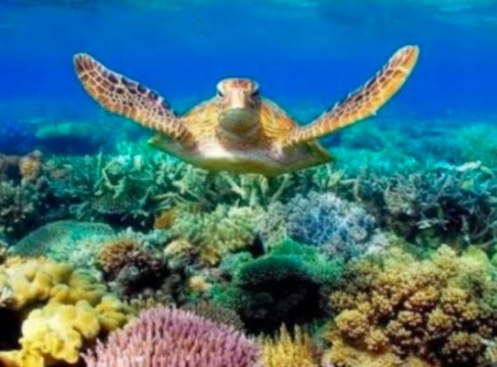 Destinan 17 millones de pesos para restaurar arrecifes