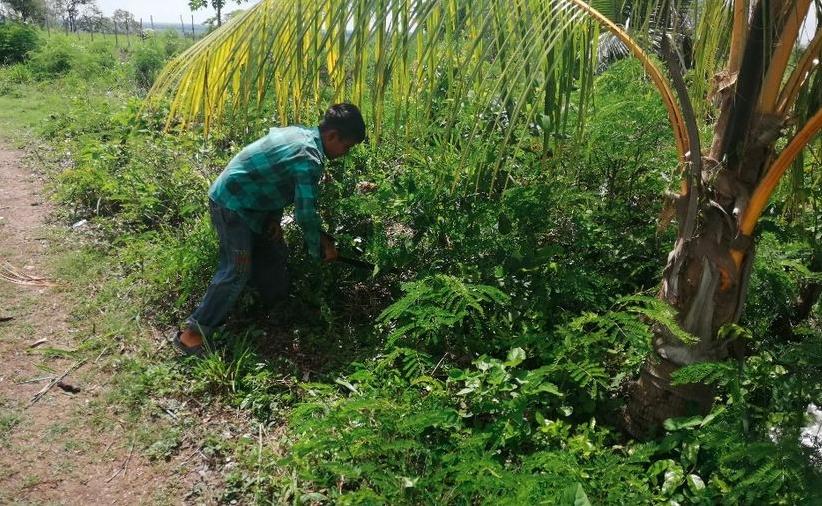 Trabajo infantil: niños cambian los libros por machetes en los cultivos