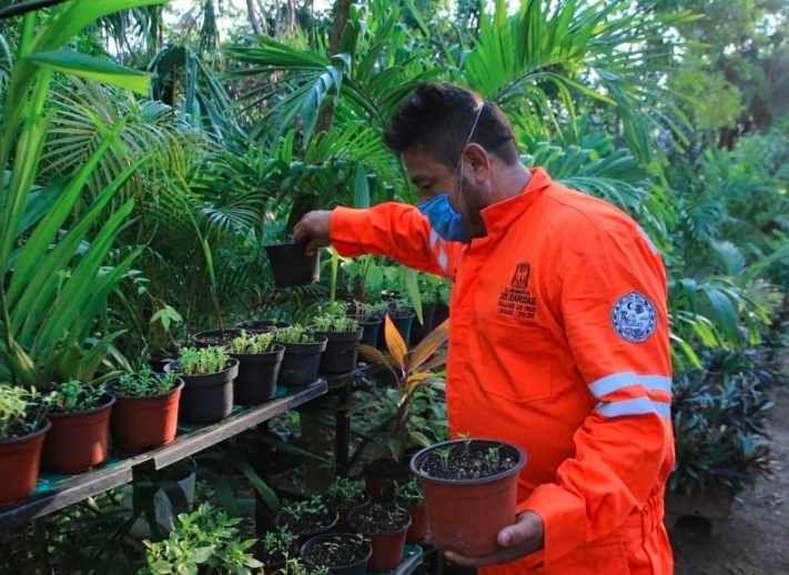 Gobierno de Solidaridad protege entorno natural con plantas de la región