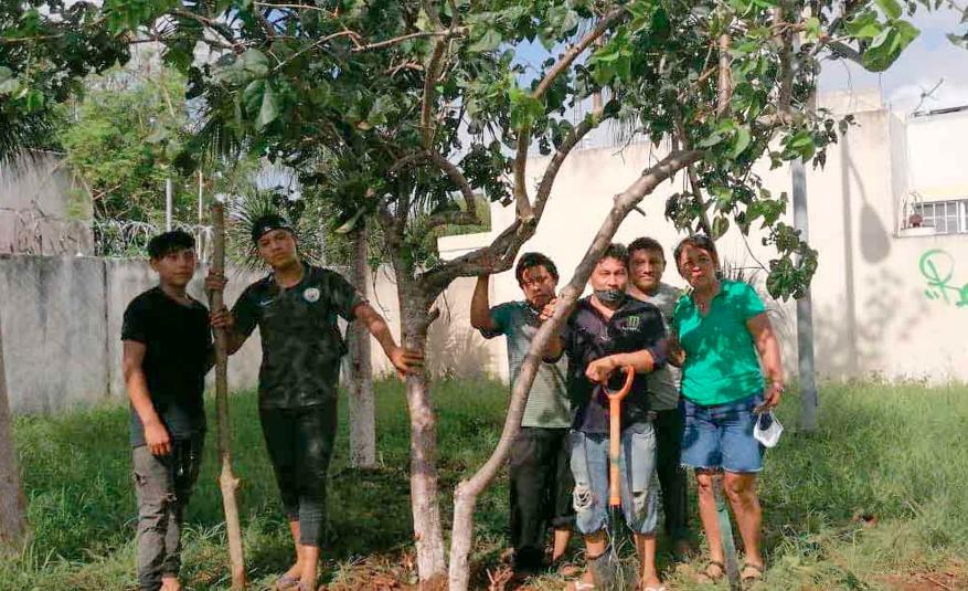 Siembran más de 300 árboles para recuperar flora en Playa del Carmen