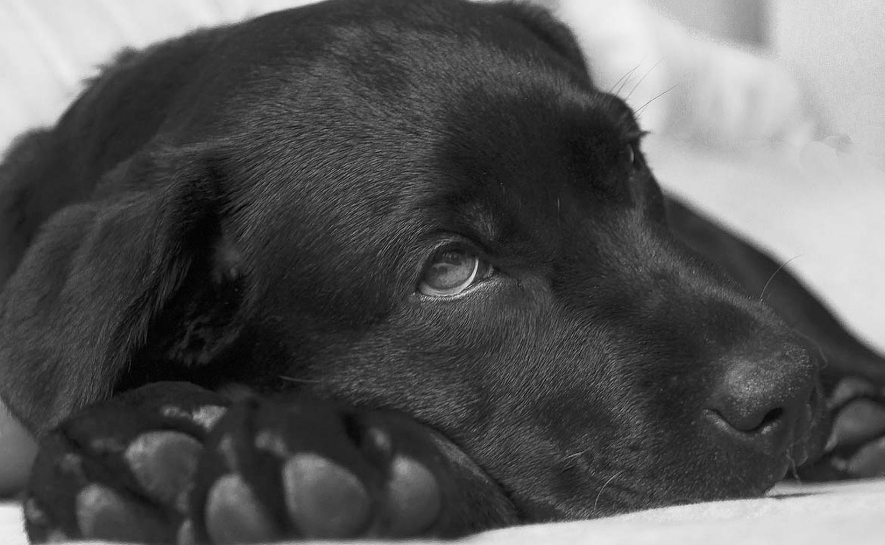 Tres perros dan positivo a infección por Covid-19 en México