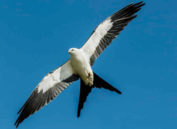 Merman hábitats para aves migratorias