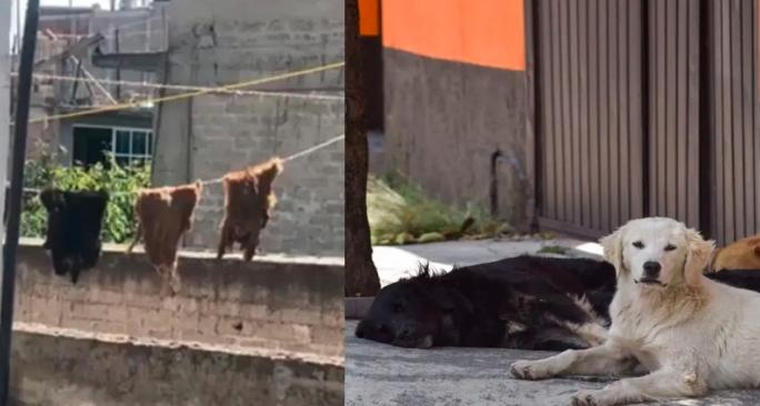 Familia es denunciada por usar pieles de mascotas en rituales