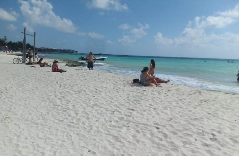 Avistamiento de tiburones, un hecho común y sin riesgo en Quintana Roo