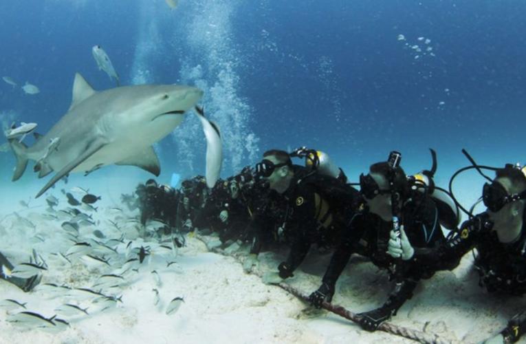Playa del Carmen: Capacitan para tratar eventos de encuentros de tiburones