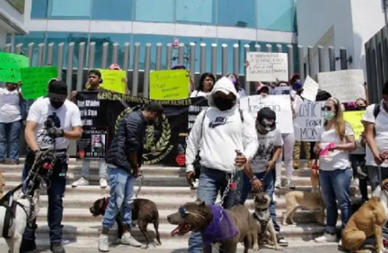 Joven fue asesinada porque al parecer rescataba perros usados para peleas clandestinas