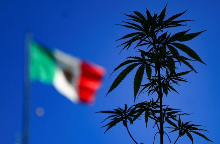 Comisión de Justicia del Senado avala la regulación de la mariguana