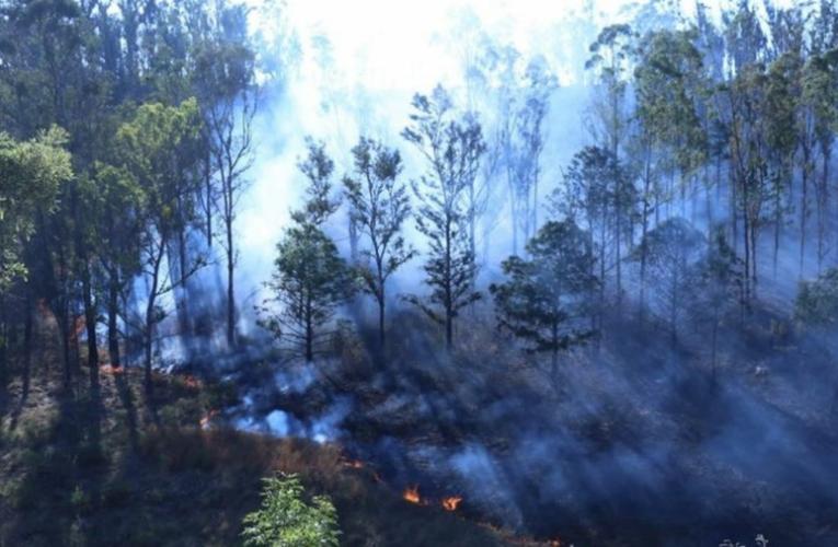Activos, al menos ocho incendios forestales en Michoacán