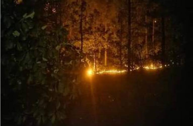 Afecta incendio área de tala ilegal en la Tarahumara