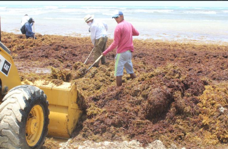 Sargazo y puerto cerrado afectan a prestadores de servicios turísticos en Playa del Carmen