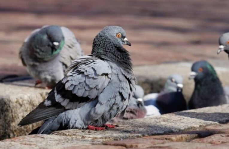 COAHUILA | Infección por heces de paloma causa muerte a quinceañera