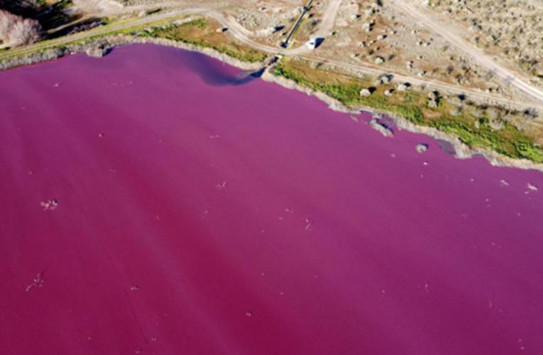 Contaminación tiñe de rosa laguna de Argentina